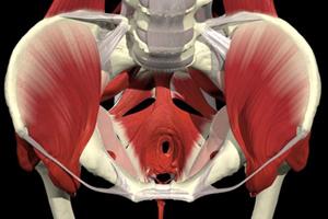 understanding coccyx pain